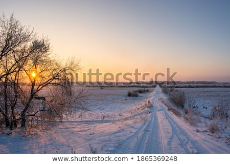 Road through snow covered trees and fields Stock photo © lovleah