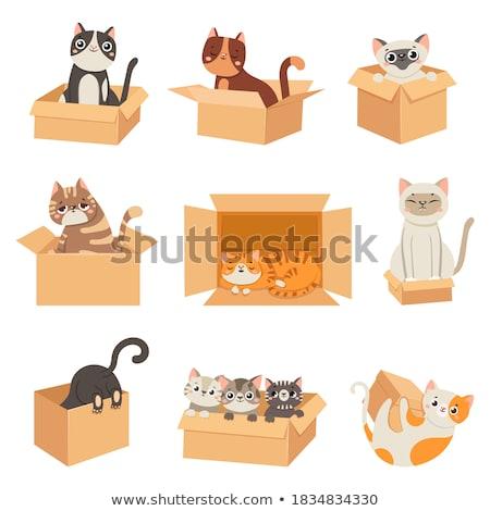 ingesteld · huisdieren · ontwerp · vector · illustraties · eco - stockfoto © izakowski