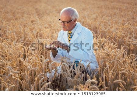 Tudós teszt új fajta génmanipulált gabona Stock fotó © Kzenon