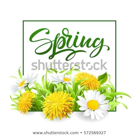 yaz · bahar · yaprakları · çiçekler · afiş · vektör - stok fotoğraf © heliburcka