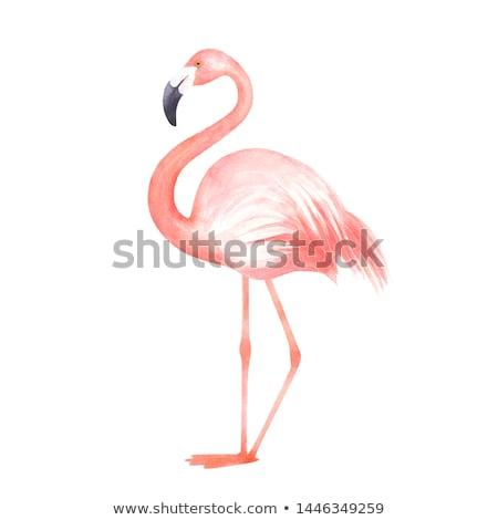 Isolato rosa Flamingo uccello estate stagione Foto d'archivio © cienpies