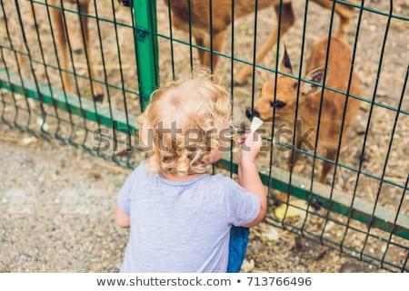 Kız küçük geyik hayvanat bahçesi kadın araba Stok fotoğraf © galitskaya