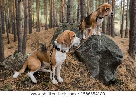 два Cute щенки Постоянный большой Сток-фото © pressmaster