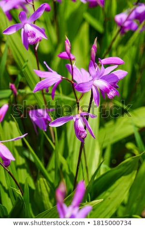 Taze orkide bağbozumu ahşap çiçek Stok fotoğraf © BarbaraNeveu