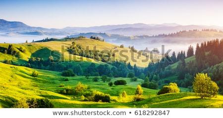 Dağlar atlar gökyüzü çim güneş Stok fotoğraf © joyr