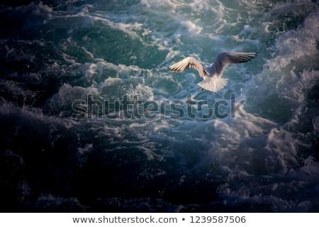 Martı uçuş derin mavi gökyüzü su ışık Stok fotoğraf © duoduo