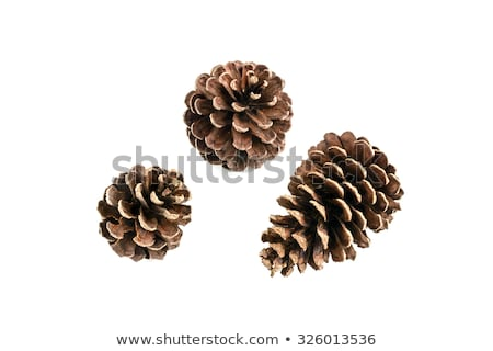 christmas pinecone isolated on white background stock photo © zeffss