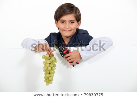Boy holding a bunch of grapes and shears Stock photo © photography33