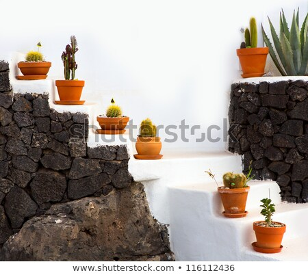 lanzarote guatiza cactus garden pots in a row stock photo © lunamarina