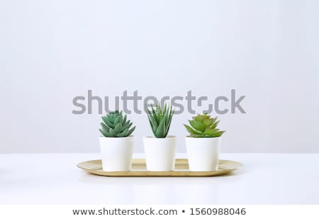 Succulente impianti naturale full frame dettaglio Foto d'archivio © prill