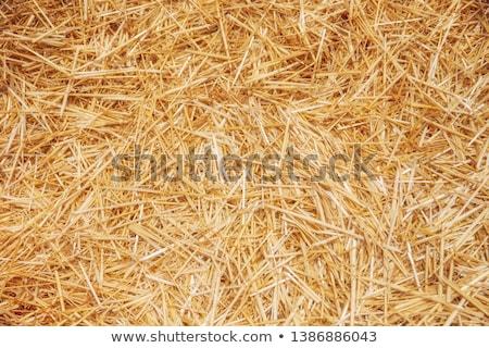Foin sécher jaune fleur texture herbe Photo stock © bendzhik
