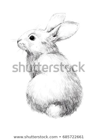 Sevimli tavşan 3D görüntü doğa tavşan Stok fotoğraf © OneO2