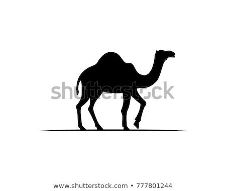 верблюда силуэта закат пустыне животного Adventure Сток-фото © ErickN
