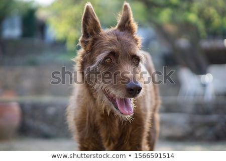 öreg mutat kutya portré állatok fiatal Stock fotó © CaptureLight