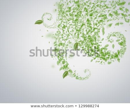 Tavasz nyár levél tornádó papír háttér Stock fotó © HASLOO