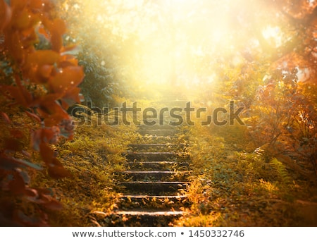 Stairs with bright colored wood stock photo © Bunwit
