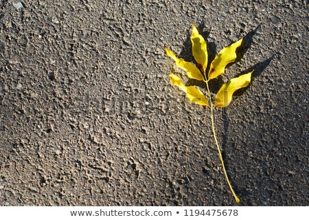 Colored lonely autunm maple tree Stock photo © vavlt