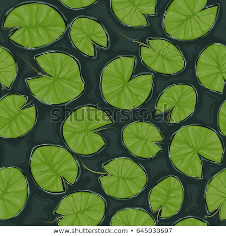 水 ユリ 葉 緑 ディスク ストックフォト © stocker
