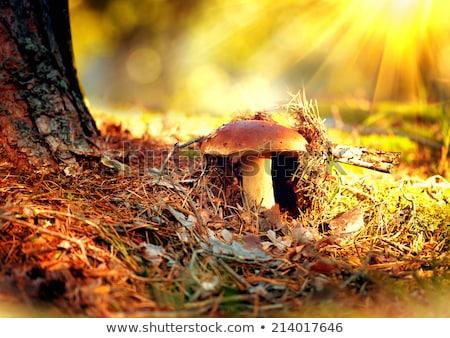 bruin · champignon · najaar · outdoor · macro - stockfoto © juniart