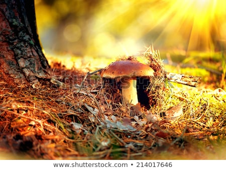 Stockfoto: Bruin · champignon · najaar · outdoor · macro