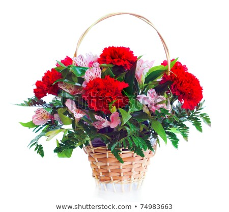 crisantemo · cesta · rojo · blanco · flor - foto stock © smuay