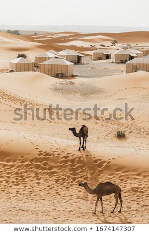 Berber tent camp in the Sahara Stock photo © Hofmeester