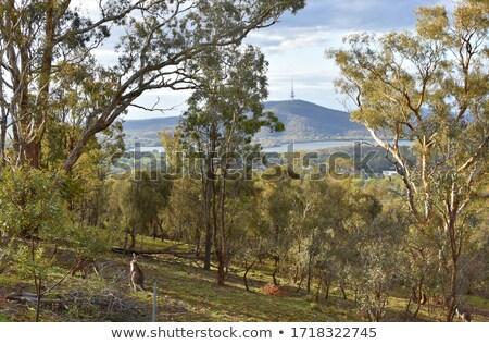 Centro da cidade Canberra torre Austrália Foto stock © benkrut