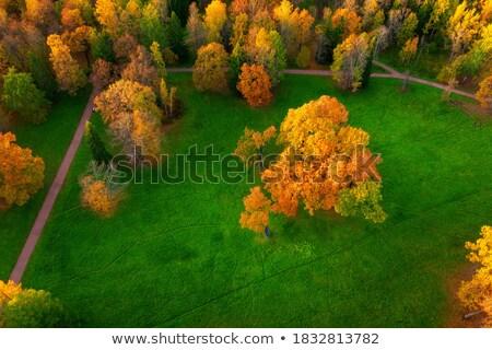 Ayrıntılı bahçeler orman Çek Cumhuriyeti Stok fotoğraf © slunicko
