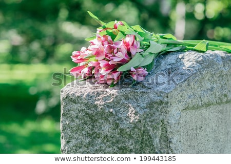 Grobu kwiaty czarno białe krzyż charakter kamień Zdjęcia stock © mariephoto