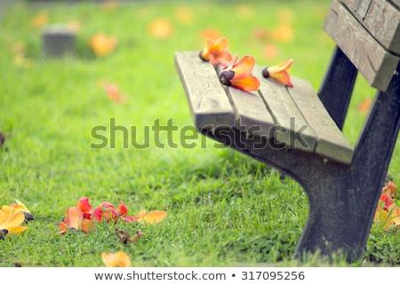 ストックフォト: 公園 · ベンチ · 歩道 · 緑 · 農村 · 草
