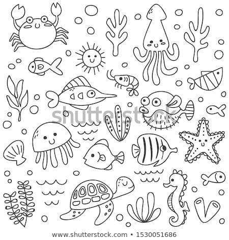 conchas · coleção · conchas · vetor · conjunto · starfish - foto stock © netkov1