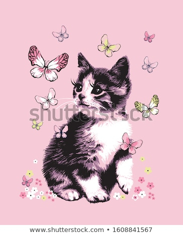 chat · papillon · papillons · isolé · blanche · yeux - photo stock © bedlovskaya