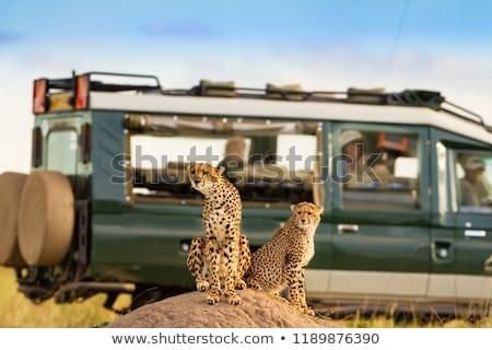 aslan · park · Afrika · bebek · Afrika · doğal - stok fotoğraf © meinzahn