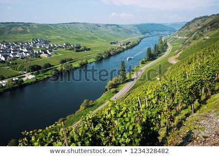 green vineyards at the river moselle in summer stock photo © meinzahn