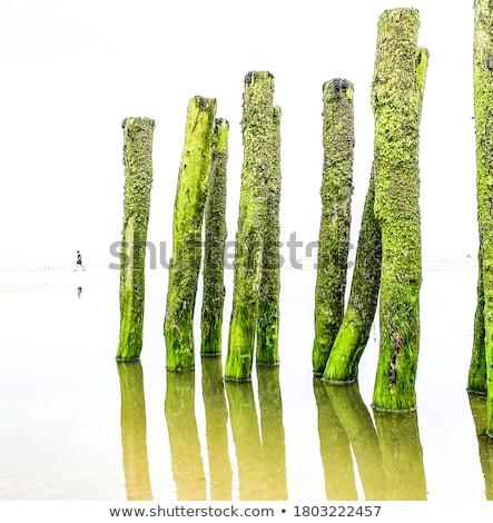 alga · praia · naturalismo · textura · fundo · areia - foto stock © marekusz