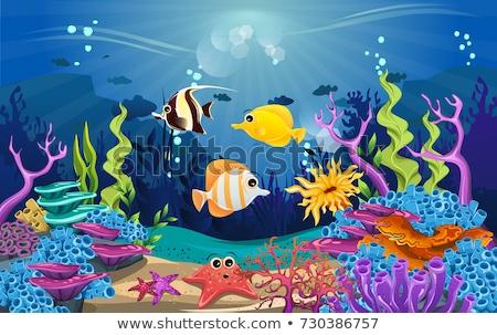 Podwodne scena ryb charakter morza tle Zdjęcia stock © bluering