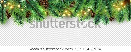 スプルース 孤立した 白 デザイン 休日 ストックフォト © -Baks-