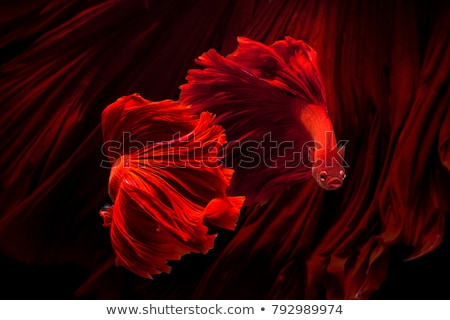 cute red fishes stock photo © adrenalina