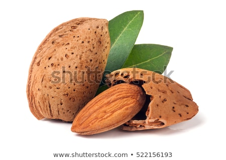 Two almonds kernel Stock photo © Dionisvera