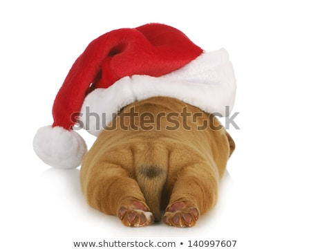 shar pei puppy in christmas hat stock photo © svetography