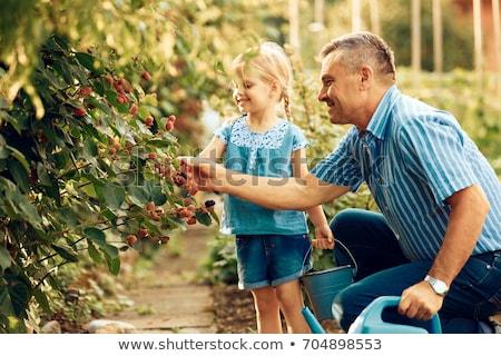 четыре · белый · фрукты · синий · десерта - Сток-фото © is2