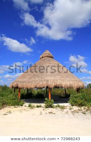 Nagy kunyhó Mexikó dzsungel ház fa Stock fotó © lunamarina