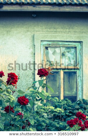 broken house in the countryside stock photo © colematt