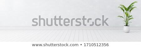 пусто студию комнату интерьер белый стены Сток-фото © olehsvetiukha