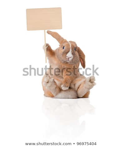 Cute bunny isolated on white with reflection. stock photo © ajn