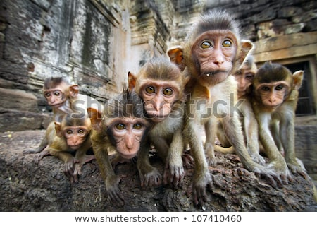 Group of monkey in rainforest Stock photo © bluering