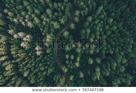 Aerial view of road Stock photo © bluering