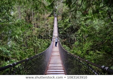 женщину поход Постоянный моста лесу глядя Сток-фото © Kzenon