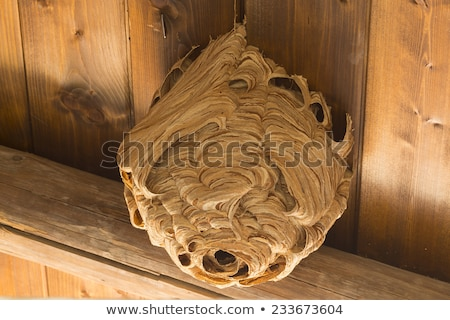 The hornet or wasp nest, vespiary isolated on white background. A hive of wild forest bees. Vector c Stock photo © Lady-Luck