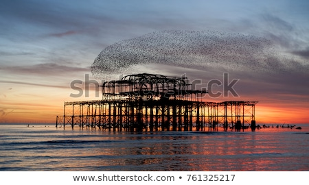 Flock of starlings over the West Pier in Brighton at sunset Stock photo © dutourdumonde